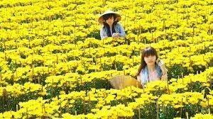 Làng nghề trồng hoa Sađéc