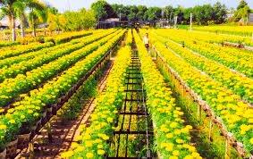 Những làng hoa đẹp nhất Việt Nam