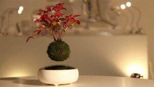 Những tác phẩm Bonsai  lơ lửng trong không khí của người Nhật