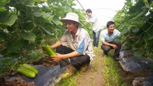 Nông sản tiêu thụ trong ngày, ăn ngay tại ruộng