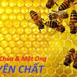 Tìm hiểu quy trình sản xuất sữa ong chúa