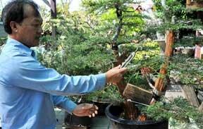 Nghệ nhân xứ Mỹ lên rừng tìm Bonsai