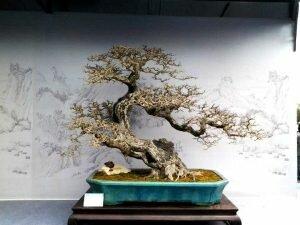 Tìm hiểu về những trường phái Bonsai ở Trung Quốc