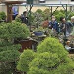 Thăm Vườn Bonsai Daiju-en Nhật Bản và Xưởng SX Chậu Cây Cảnh