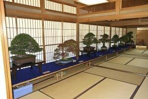 Khám phá nhà vườn Nhật Bản và viện bảo tàng bonsai Shunka-en ở Tokyo