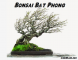 Kinh nghiệm nghệ nhân về Bonsai Bạt Phong (gió lùa)