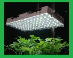 Kinh nghiệm & ứng dụng đèn chiếu sáng cho cây trồng