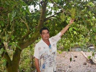 Đổi đời nhờ Mãng Cầu ghép cây Bình Bát