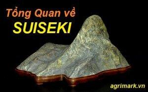Tổng quan về nghệ thuật đá cảnh Suiseki