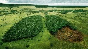 Giải pháp khoa học ít tốn kém và hiệu quả để chống nạn phá rừng