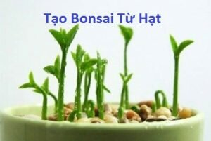 Tạo một cây Bonsai bắt đầu từ hạt