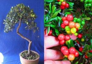 Một số đặc tính và kinh nghiệm về cây HẢI CHÂU