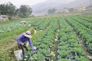 Một số kinh nghiệm bản địa trong canh tác nông nghiệp