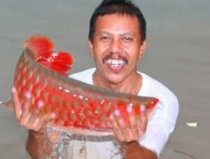Bí Ẩn Cá Huyết Rồng Ở Biển Hồ