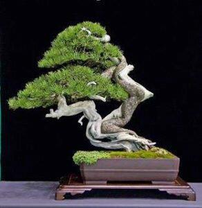 Chiêm Ngưỡng 12 Cây Bonsai Song Thụ Cực Kỳ Ấn Tượng